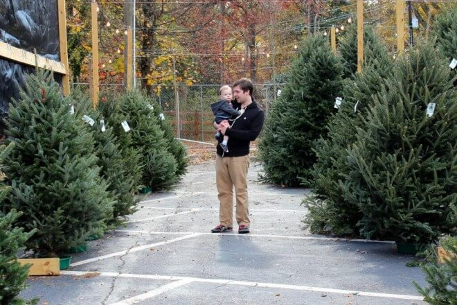 Buying a Green Christmas Tree