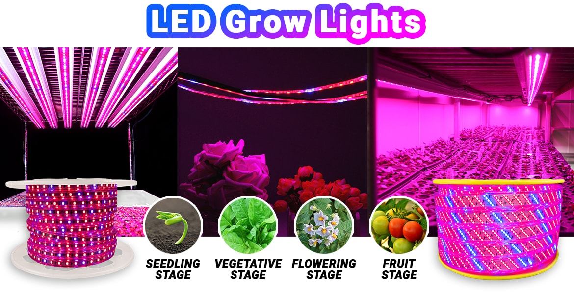 Shop All LED Grow Lights!